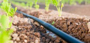irrigazione-a-goccia