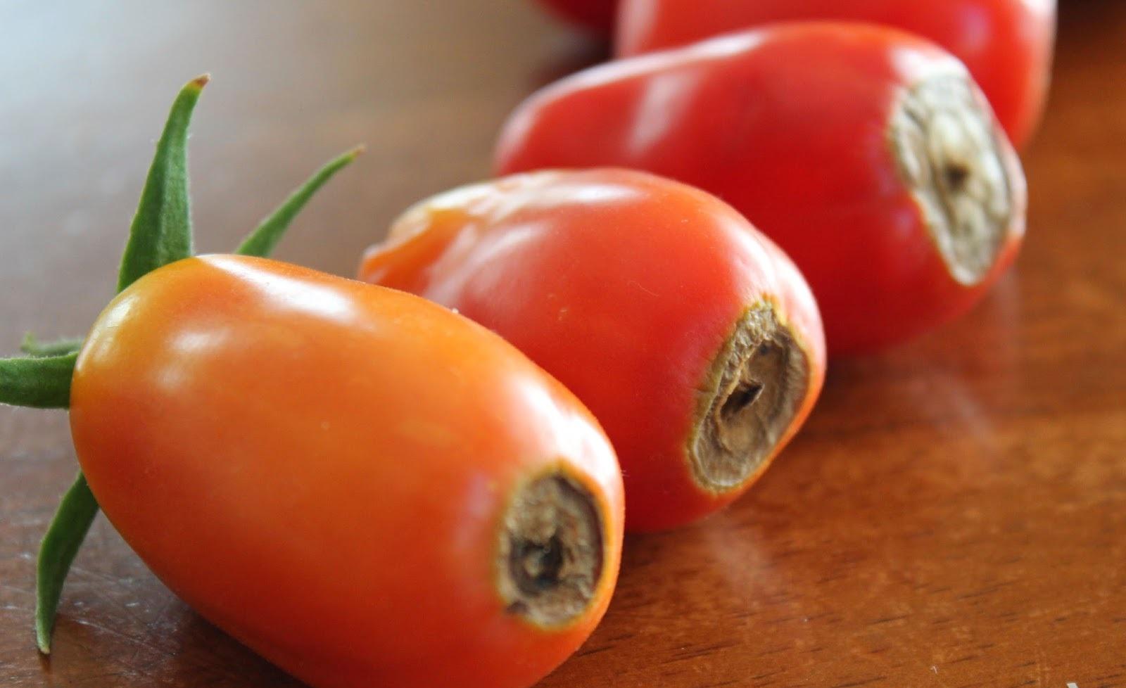 Marciume apicale del pomodoro cause e soluzioni for Malattie pomodoro