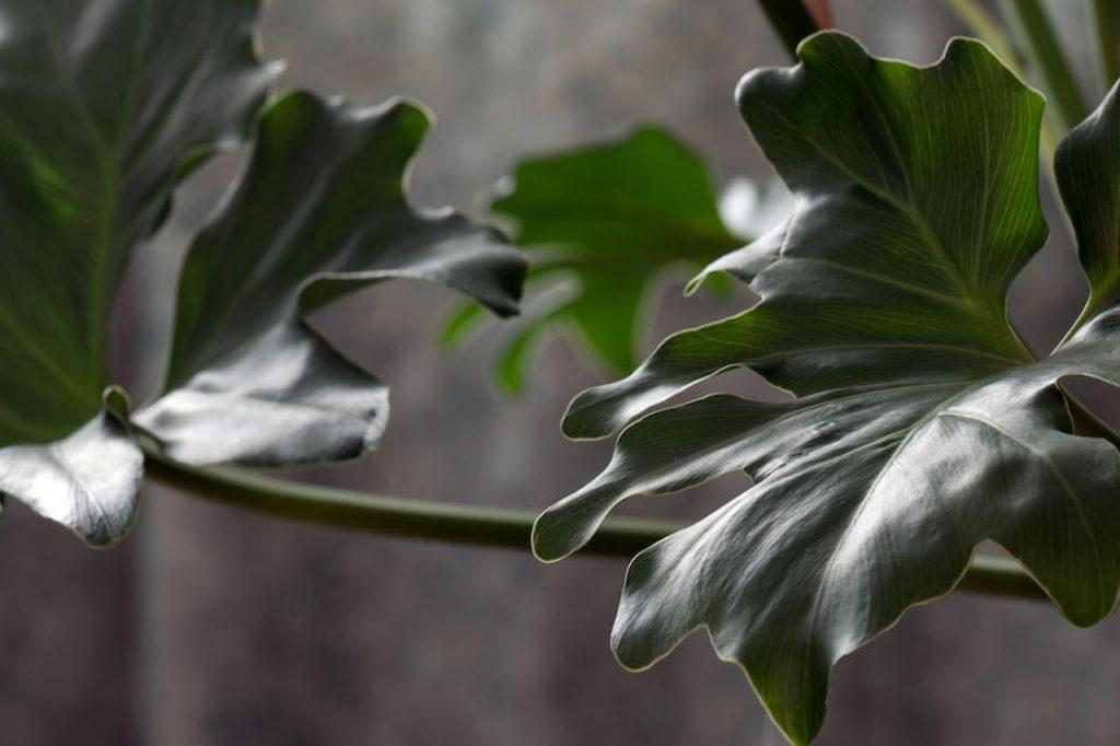 travaso di una pianta