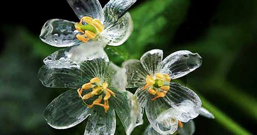 fiore scheletro