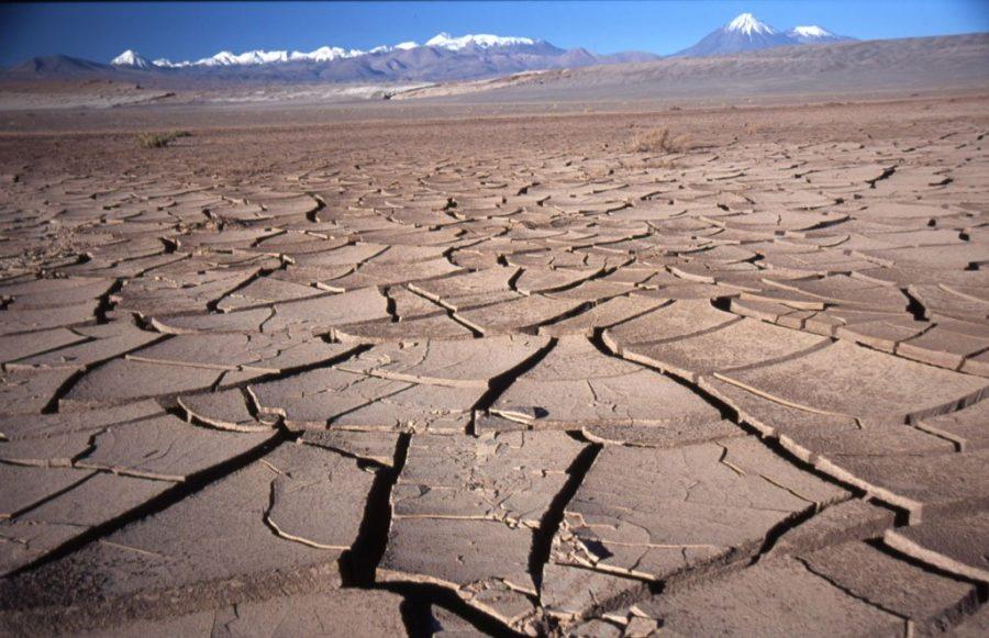 Cile deserto fiorito di Atacama