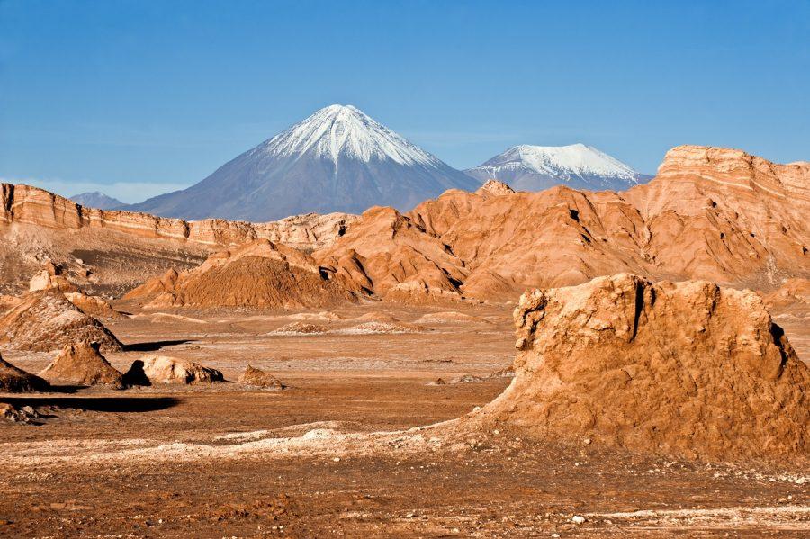 deserto fiorito di Atacama norte grande Cile