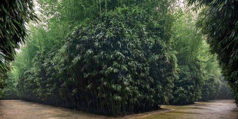 Labirinto della Masone Fontanellato Parma Franco Maria Ricci bivio di bambù