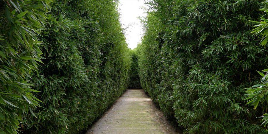 Labirinto della Masone Fontanellato Parma Franco Maria Ricci corridoio di bambù