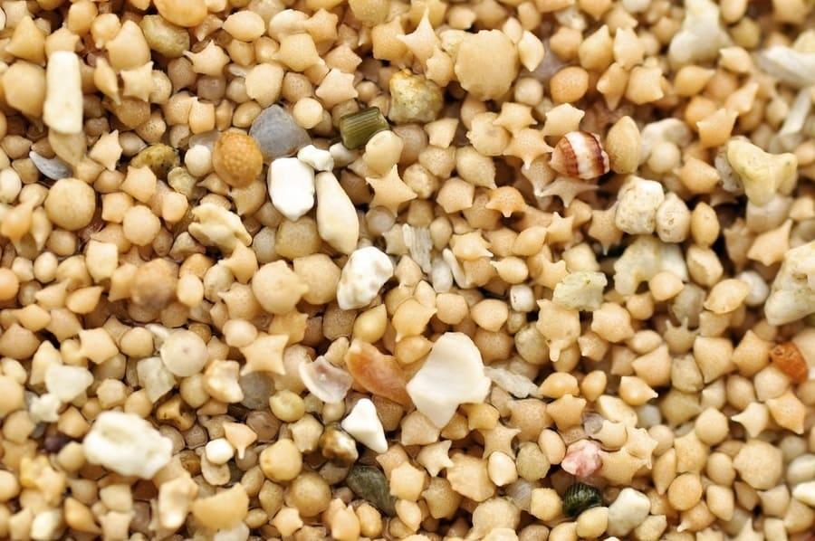 Le-spiagge-con-la-sabbia-di-stelle-di-Okinawa