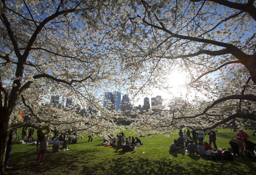 cambiamenti climatici gli alberi in città crescono più velocemente di quelli in campagna central park