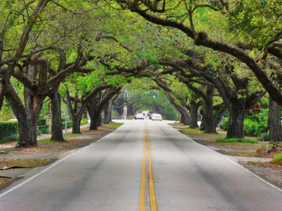 cambiamenti climatici gli alberi in città crescono più velocemente di quelli in campagna studio