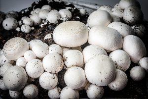 come coltivare i funghi