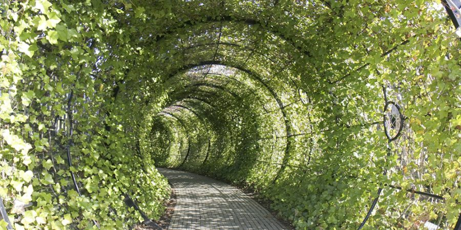 poison garden tunnel giardino dei veleni alnwick
