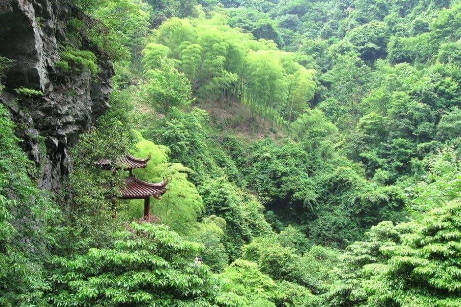Inquinamento in Cina - Una foresta di bambù, esempio di riforestazione