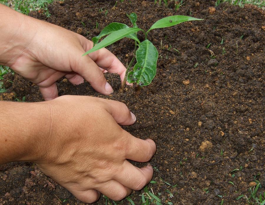 Quando nasce una bimba si piantano 111 alberi