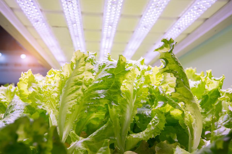 coltivare ortaggi direttamente in casa