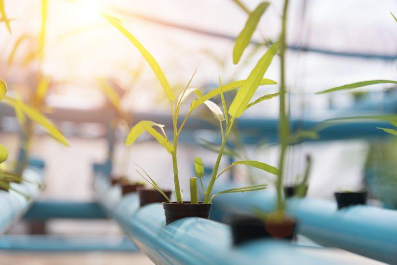 coltivare-ortaggi-in-casa