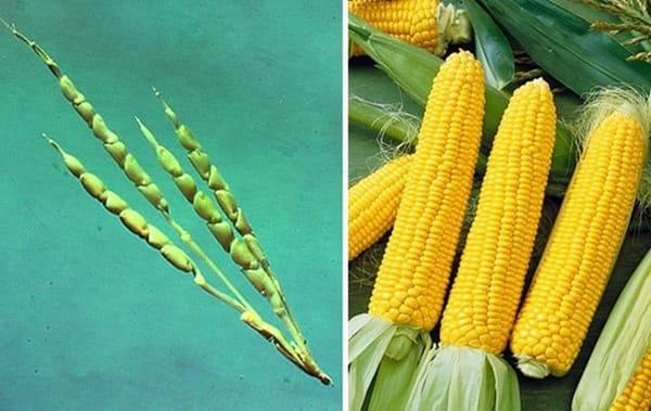 frutta-e-verdura-mais-selvatico-e-moderno