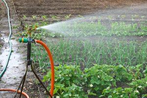 come capire se una pianta ha bisogno di acqua