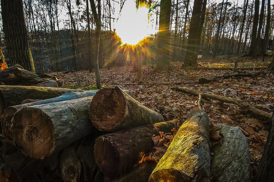 Più della metà delle foreste europee è scomparsa