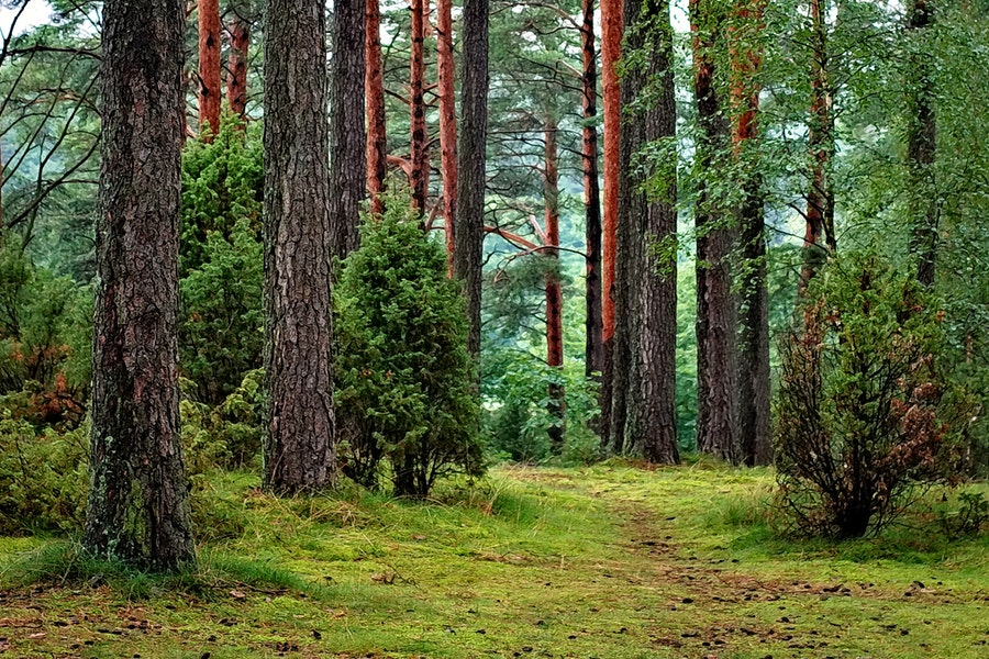 Più della metà delle foreste europee è scomparsa.