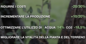 aumentare la produzione di olio d'oliva