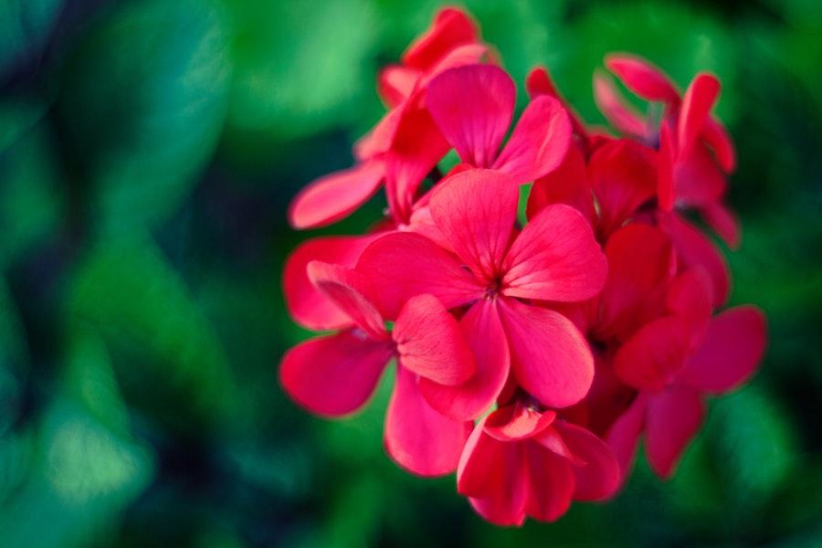 piante anti zanzare