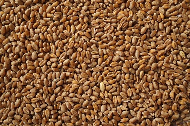 aumentare la resa qualitativa dei cereali