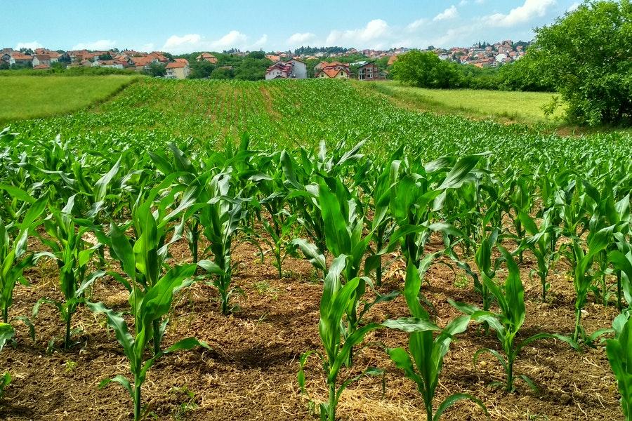 Perché il biologico in Italia è così importante?