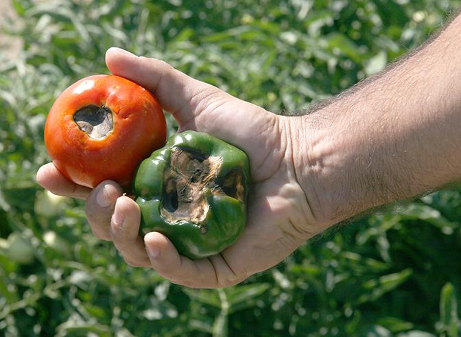 importanza del Calcio alle colture