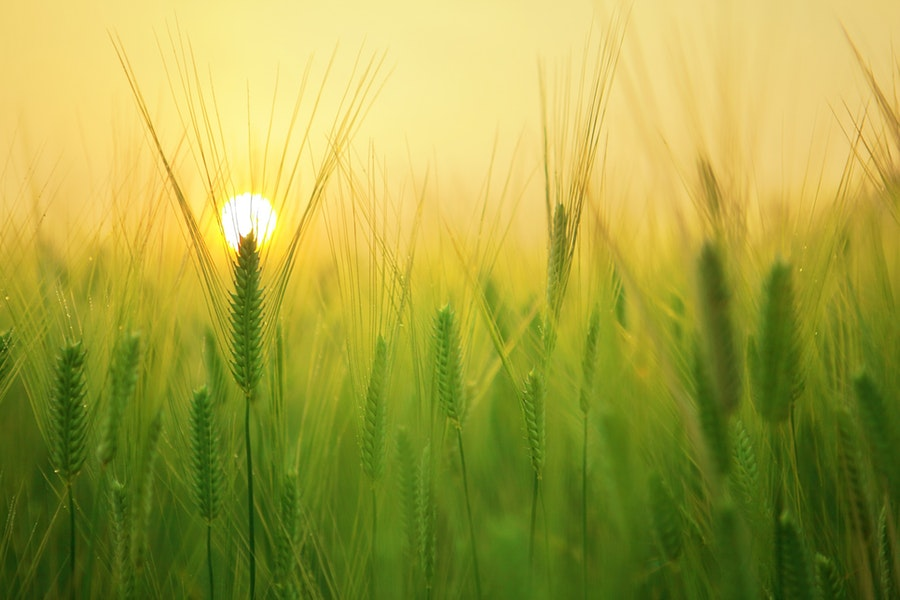 Fiere agricole ad Ottobre