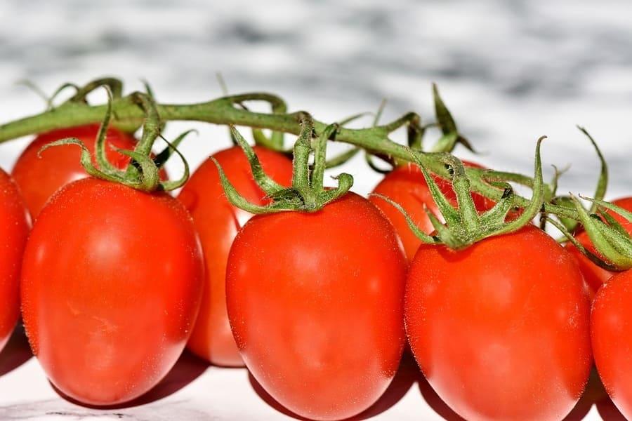 etichette pomodoro