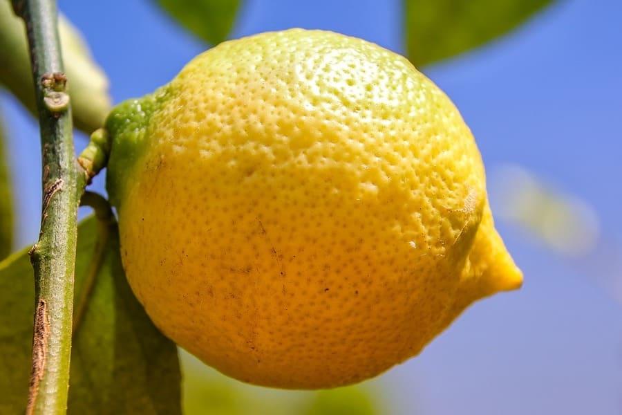 irrigazione limoni