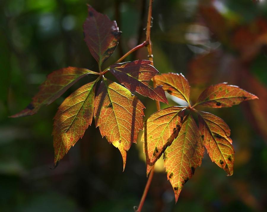 foglie gialle rose