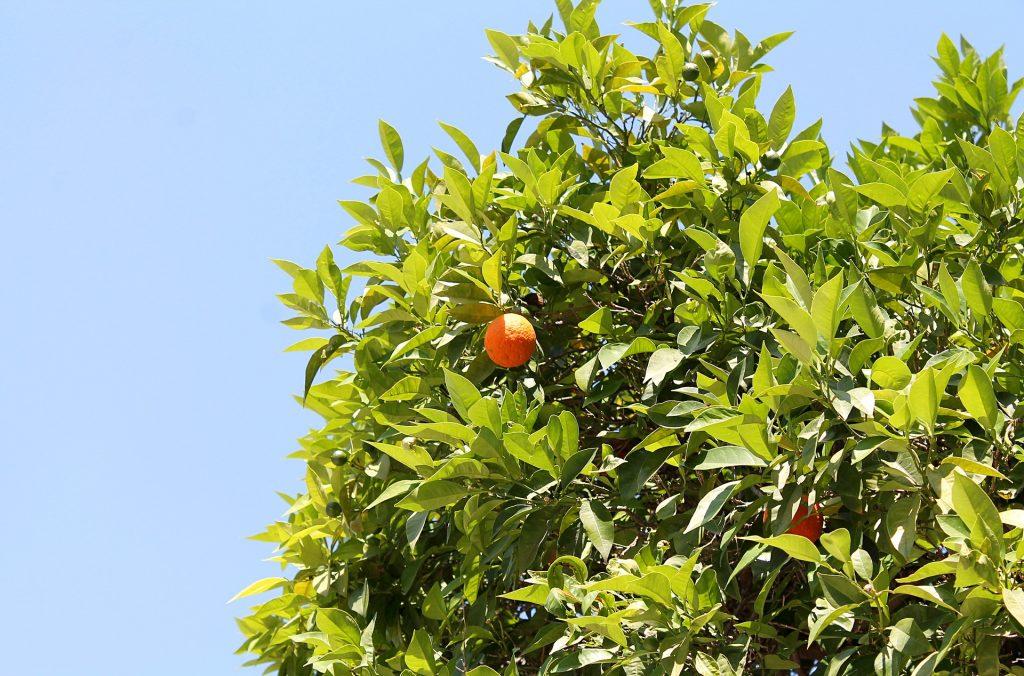 tangerine-3462204_1920