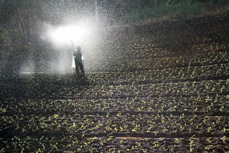 fertilizzanti rameici