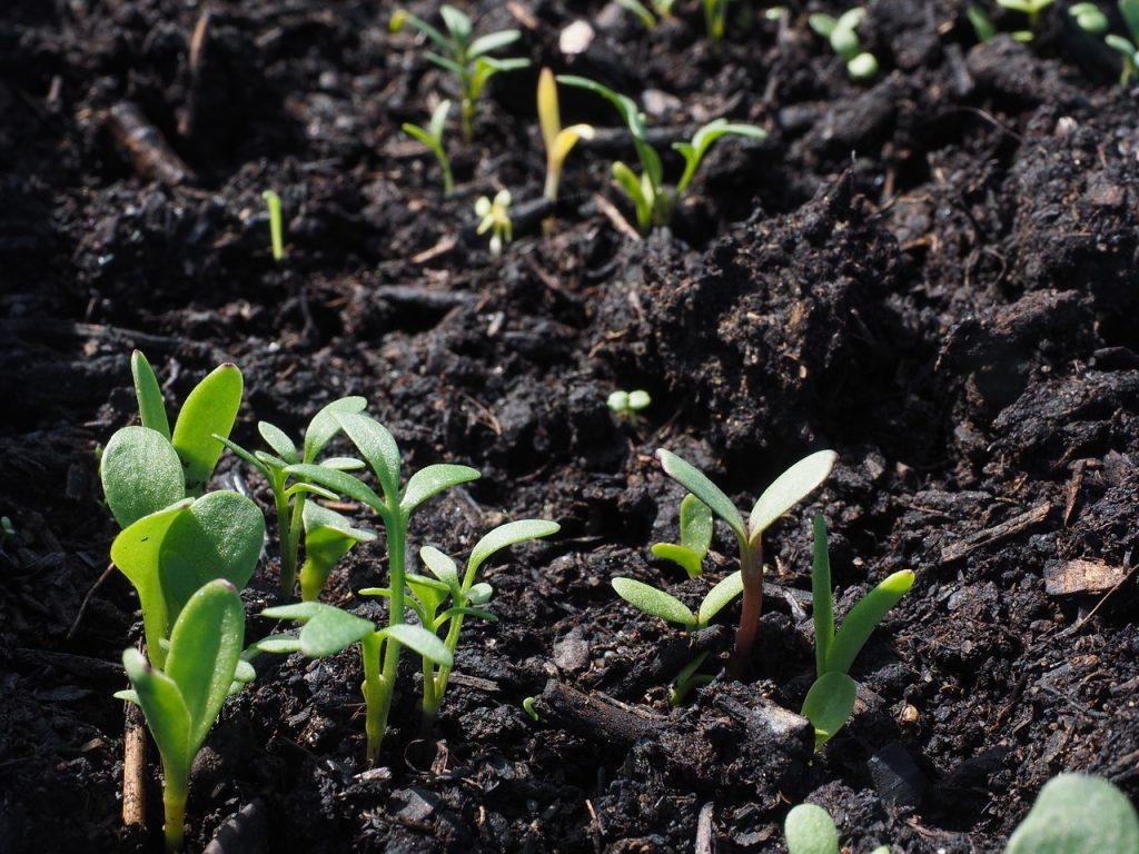 Germinazione del seme