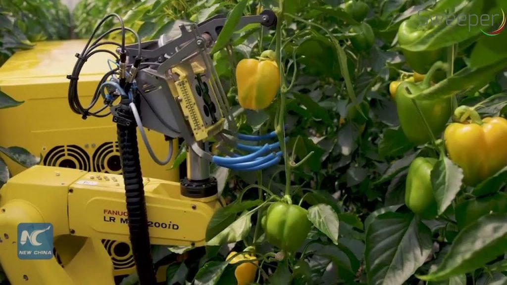 robot raccoglitore