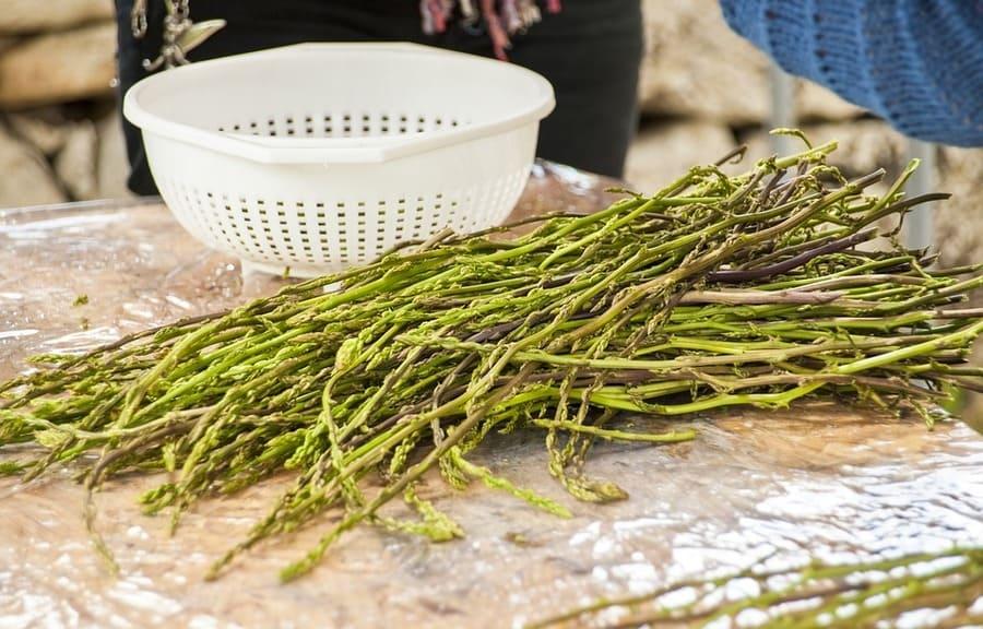 asparago spinoso