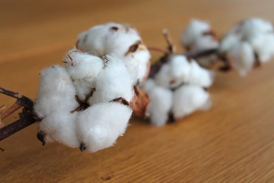 fibre tessili da piante