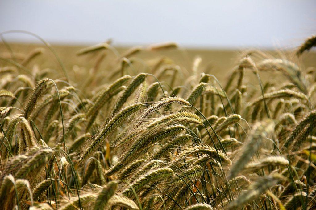 IMU agricola