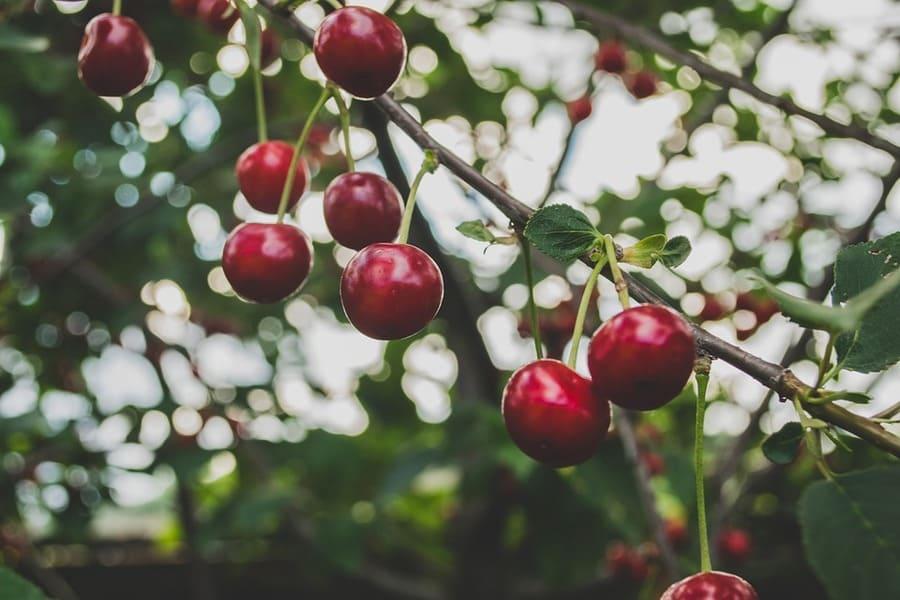 coltivazione alberi frutto giardino
