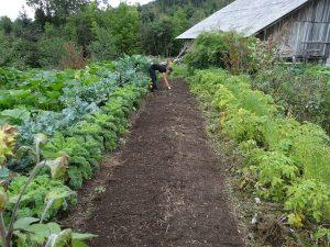 come costruire orto