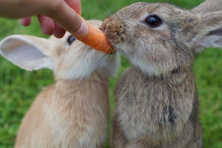 conigli cosa mangiano