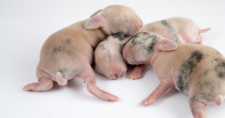coniglietti appena nati
