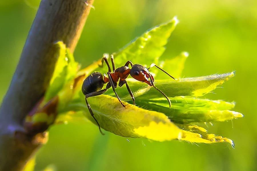 rimuovere formicaio