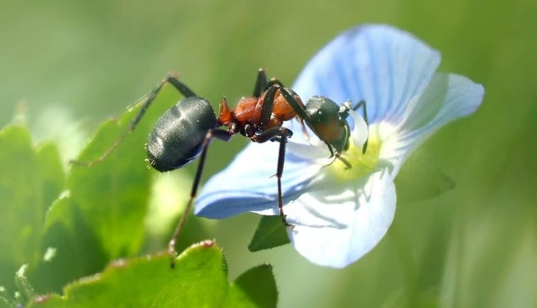 uccidere formiche giardino