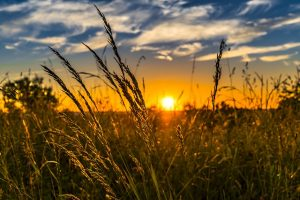agricoltura sussistenza
