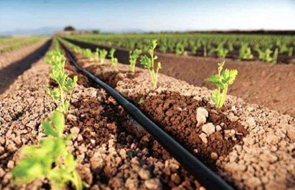 coltivazioni estive e irrigazione
