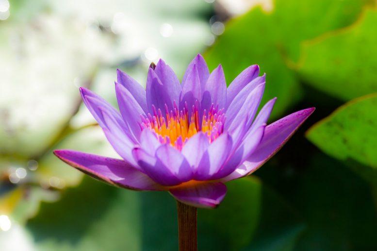 Fiori Nel Mondo.Piante Asiatiche I Fiori Piu Belli Diffusi Nel Mondo