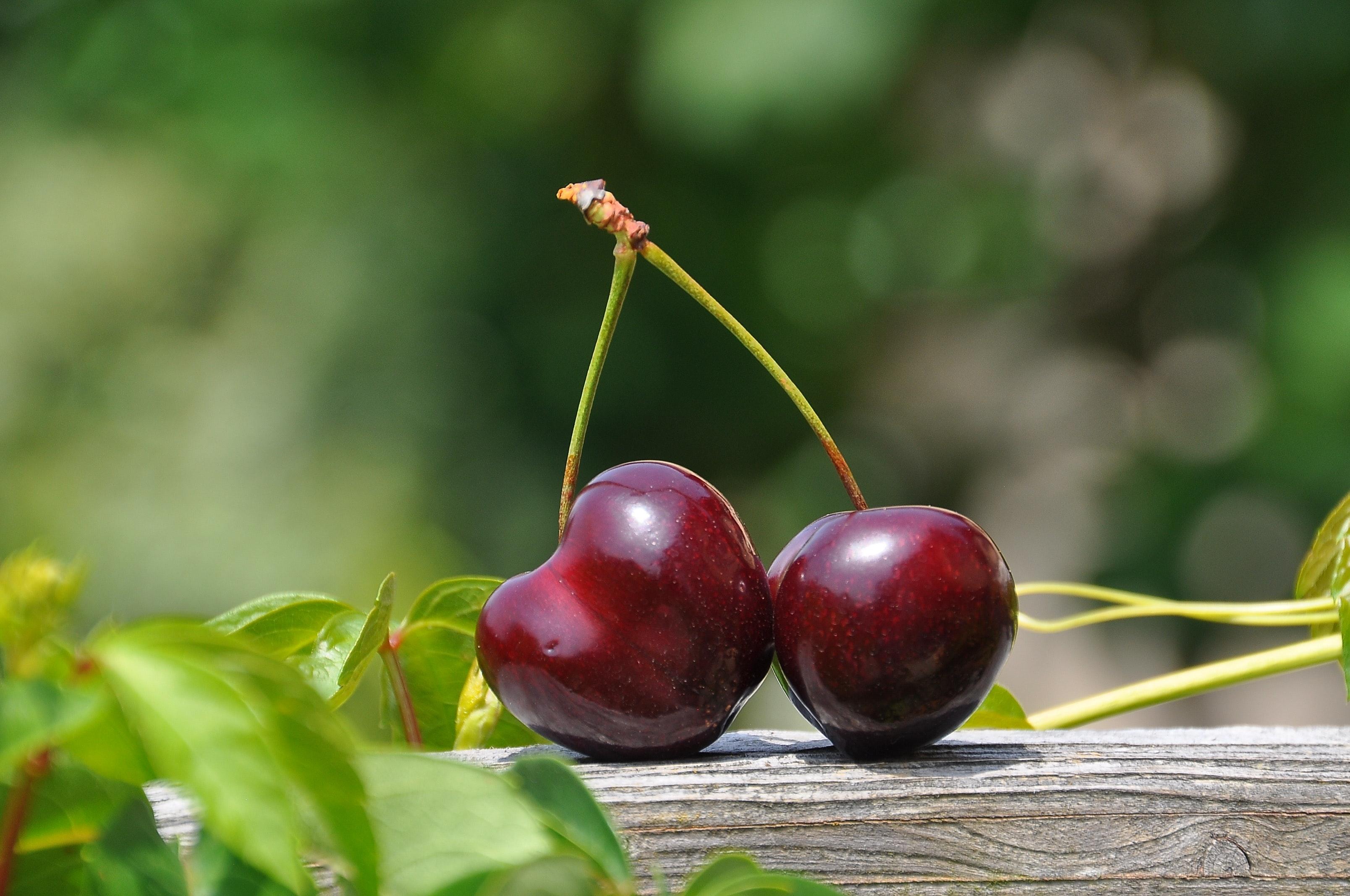 frutti di ciliegio Ferrovia