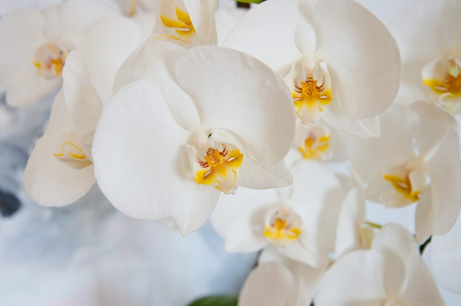 Fertilizzante naturale per orchidee