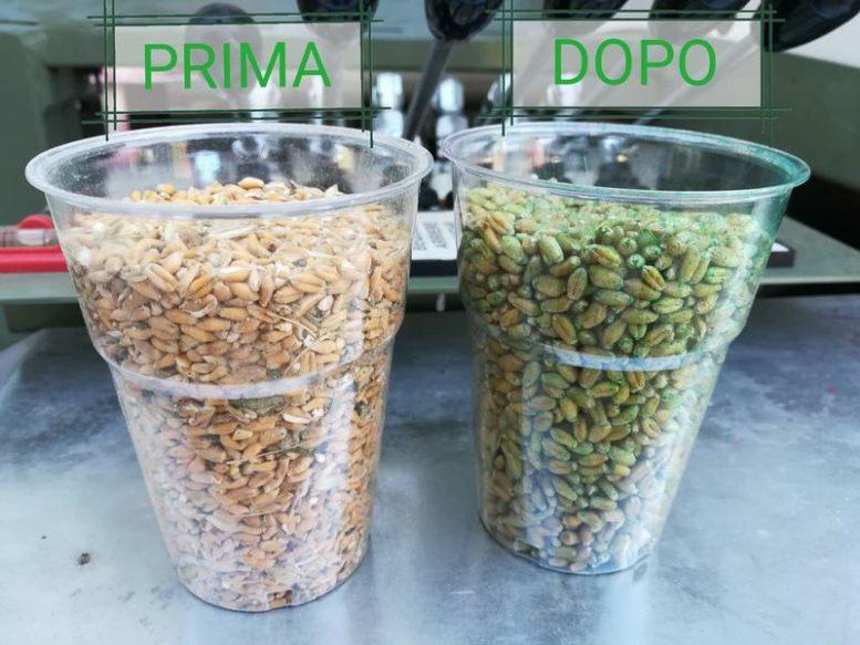selezionatrici sementi