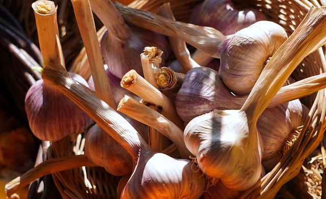 moscerini delle piante e aglio